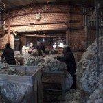 2jhanVu7D4rOcTwE4s GctL33MtRtucmpQZ99cvTLhQkpnYATOed2exr2kvHYd dn6WfBYixU7Bi1cchTQiVF0 150x150 - Patagonia Inc. effettua il primo ordine di lana prodotta dagli allevatori di pecore nell'omonima regione argentina