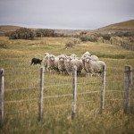 Da8Iqnih6Wn5UYthWIpxyHk5XteBRLY78aztHajU3pg 150x150 - Patagonia Inc. effettua il primo ordine di lana prodotta dagli allevatori di pecore nell'omonima regione argentina