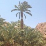 TRAIL RUNNING DESERTO DEL SINAI TEST NIKE FUELBAND ADIDAS ENERGY BOOST XBIONIC SOCKS XITANIT BANDANA TROPICALE AQABA DAHAB SHARM EL SHEIK 122 150x150 - #TRAILRUNNING Correndo nel deserto del Sinai: test Nike+ Fuelband, Adidas Energy Boost, Xbionic, Salomon