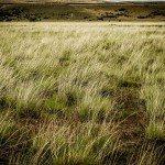 jDlF7A9teSxAmdd4NlV6J2iOBTJUb35gtU35cRO0 ac iUnukAUigYZJCY5R 9t4fFw5c0mVCZNzfZAzuySyhk 150x150 - Patagonia Inc. effettua il primo ordine di lana prodotta dagli allevatori di pecore nell'omonima regione argentina