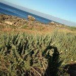 RUNNING IN CASCAIS NEAR LISBOA Lisbona ATLANTIC OCEAN SEA INTERNATIONAL PRESENTATION OF NEW CITROEN C4 PICASSO RUN CORSA TEST WITH BROOKS PURE NIKE FUEL BAND XBIONIC SOCKS XBS PERFORMANCE SALOMON EXO 10 150x150 - Correre (TRAIL RUNNING) in Portogallo, un meraviglioso tracciato di 10km a Cascais vicino a Lisbona