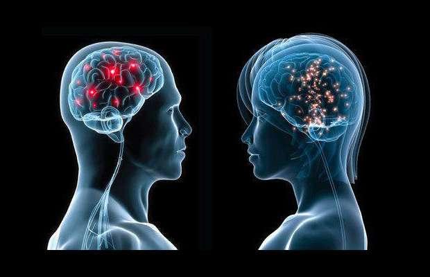 cervello uomo donna - Scoperto nel cervello l'interruttore che attiva la paura