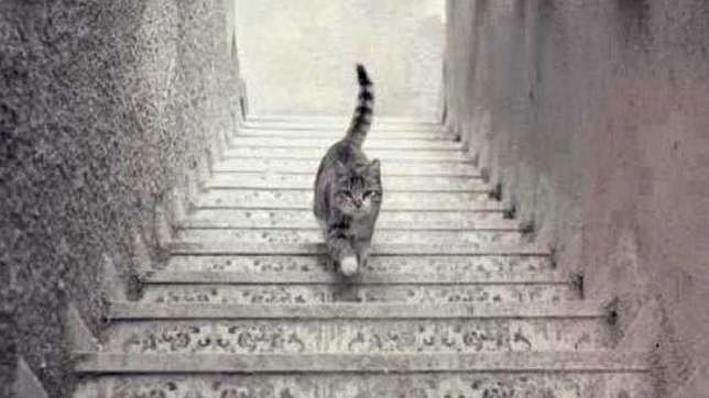 Foto gatto che sale o scende