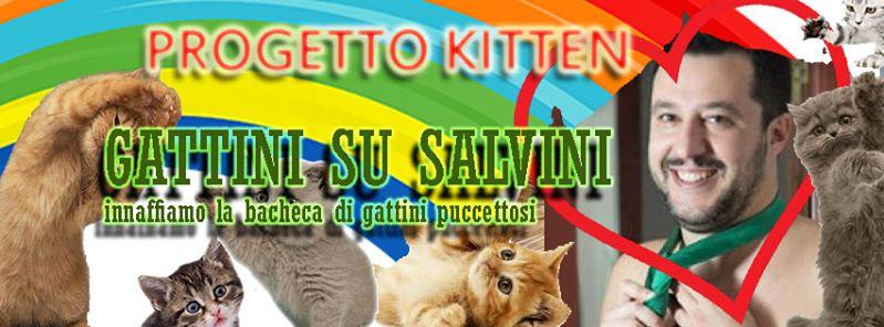 11182098 371237333083306 7323541890812694566 n - La pagina Facebook di Salvini invasa dai gattini