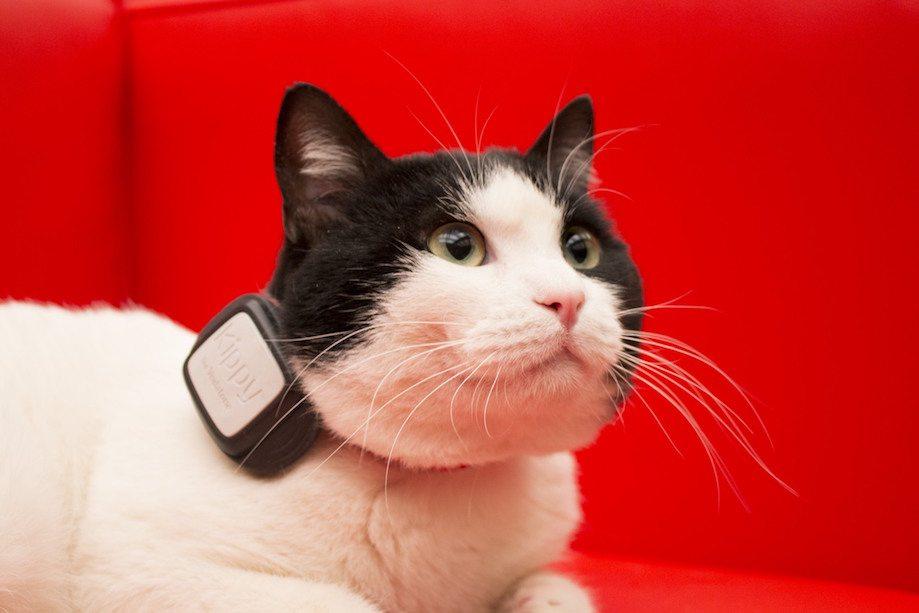 non perdere tuo animale kippy vodafone - Non perdere il tuo animale con Kippy di Vodafone