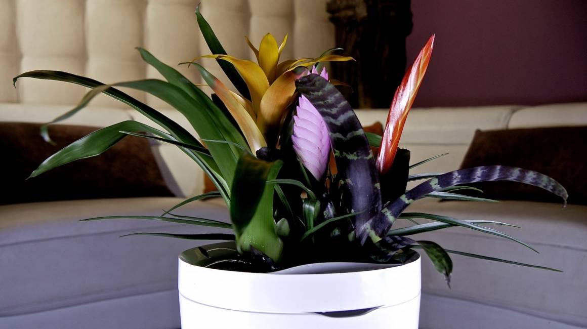 Parrot POT Il vaso smart che annaffia le piante al tuo posto 1160x650 - Parrot POTIl vaso smart che annaffia le piante al tuo posto