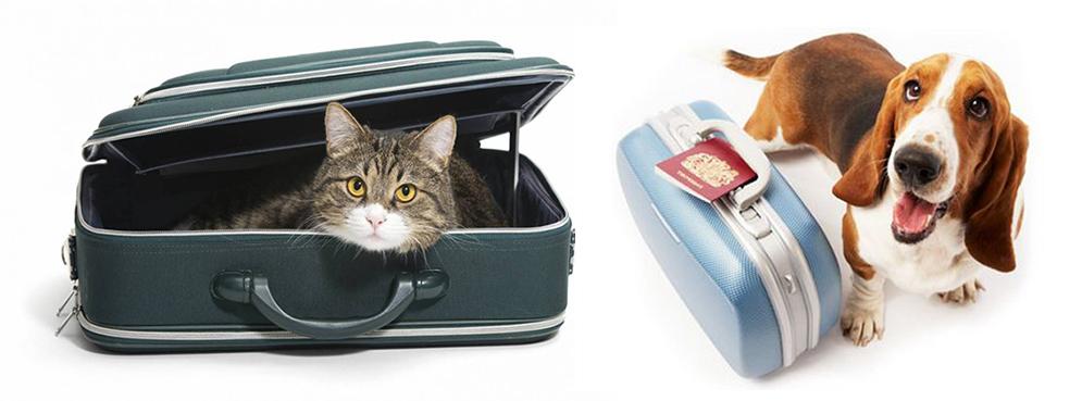 Migliore trasportino per cani e gatti la guida con i consigli e la classifica
