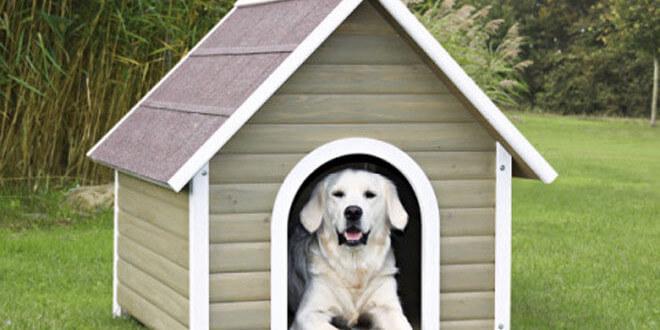 Scegli la cuccia cani e gatti economica più bella e confortevole: guida completa
