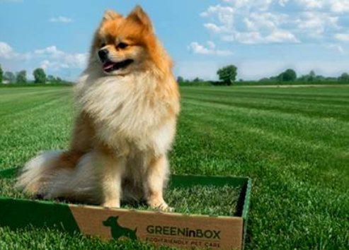 Greeninbox un vero prato in casa per i nostri animali da for Animali da casa