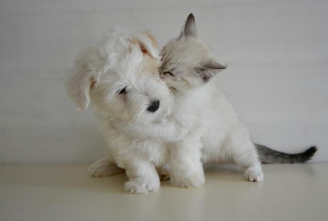 kiss 2728106 640 - Agevolazioni fiscali per chi ha un animale in casa?