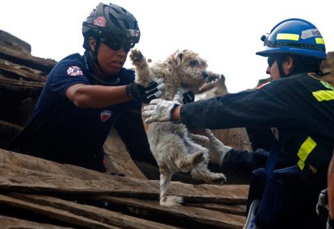 animali - La protezione civile si occuperà anche degli animali