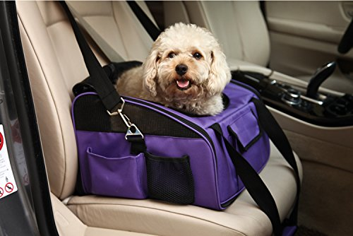 viola borsa trasporto auto per cucciolo macchina sedie per cani animali - Come viaggiare con la macchina del tempo. A Roma la tecnologia catapulta ai tempi di Augusto