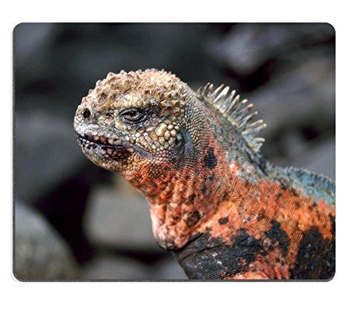 liili mouse pad tappetino per mouse in gomma naturale marine espanola iguana - Le immagini delle Isole Galapagos le trovi su Google Street View che mappa uno dei luoghi più esclusivi al mondo