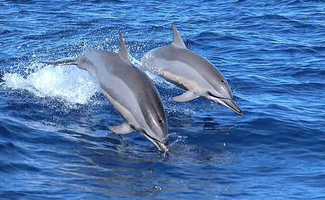 delfini - Rotary. Due borse di studio di 5.000 euro per tutelare i mammiferi marini