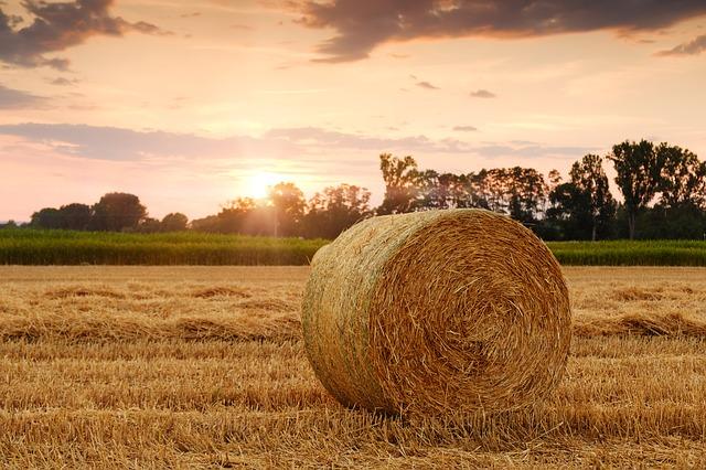 straw bales 3521063 640 - L'agricoltura in prima pagina. Convegno a Milano sull'informazione