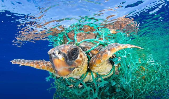 free - Il Rotary lancia un progetto per eliminare la plastica dalle acque del Mediterraneo