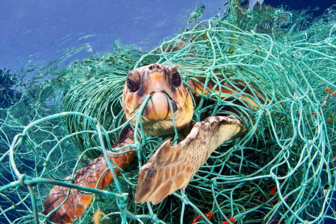 tartaruga impigliata nelle reti 1160x773 - IL ROTARY PER L'AMBIENTE. AVVIATA L'OPERAZIONE PLASTIC FREE WATERS