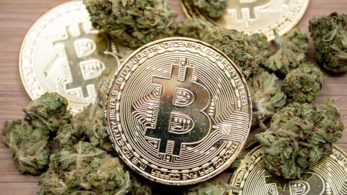 bitcoin e cannabis questo negozio di cbd nel regno unito accetta criptovaluta health europa - Cannabis acquistabile con Bitcoin nel negozio CBD Shopy nel Regno Unito