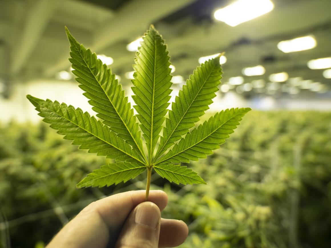 come la blockchain potra aiutare lindustria della cannabis 1160x870 - Come la Blockchain potrà tracciare le vendite dell'industria della Cannabis legale