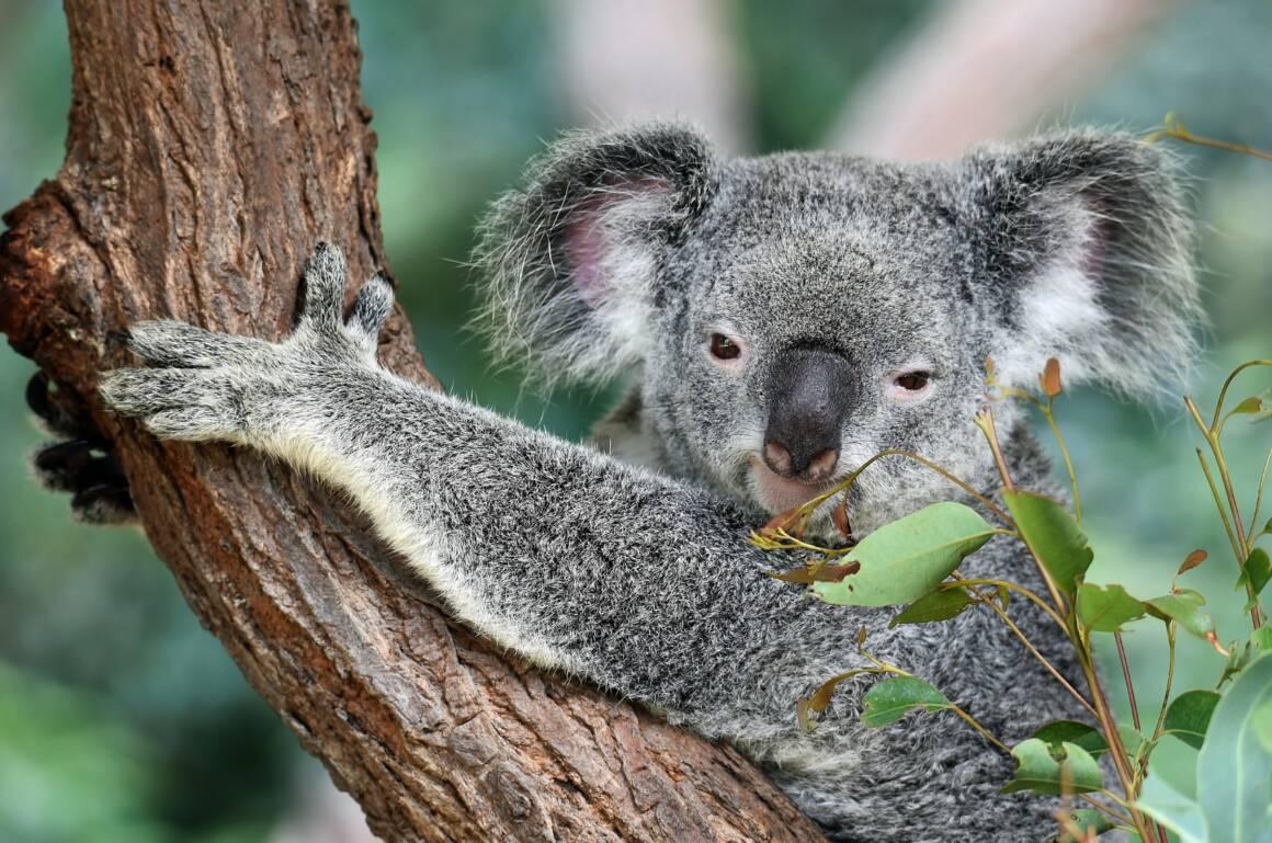 riduzioni del tasso a causa del coronavirus la banca centrale australiana lo ha fatto per prima 1160x769 - Riduzioni del tasso a causa del coronavirus: la banca centrale australiana lo ha fatto per prima